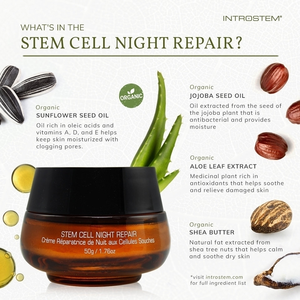 Skincare products for fall Stem Cell Night Repair infographic