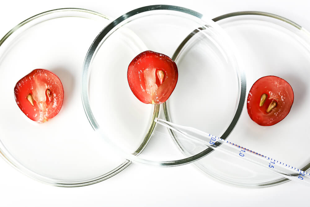 Grapes in lab